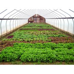 طرح توجیهی تولید محصولات خارج از فصل در گلخانه (صیفی جات گلخانه ای) به ظرفیت 3000 متر مربع