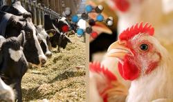 طرح توجیهی تولید خوراک دام و طیور با ظرفیت 15 هزار تن در سال